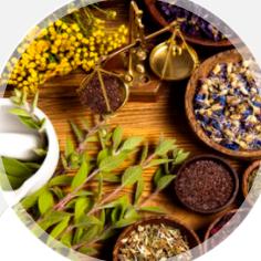 Plantas Medicinales y Tiendas Naturistas